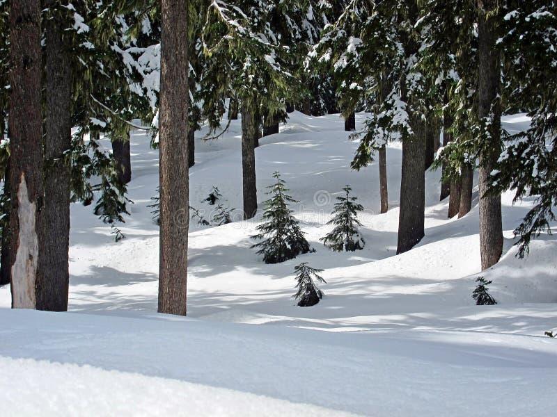 Scène de neige de capot de Mt dans la forêt photos stock