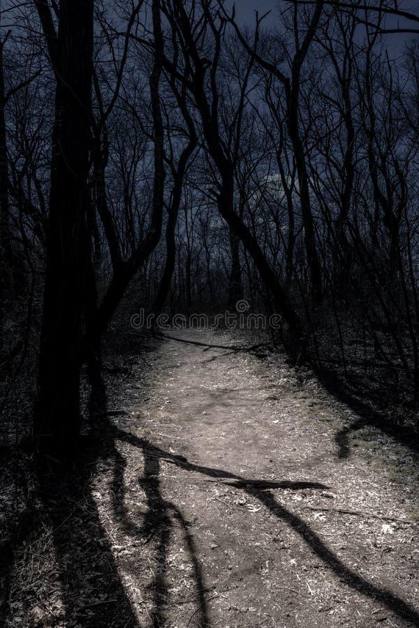 Scène de nuit dans une forêt hantée, avec des branches surplombant un chemin lune-allumé photographie stock libre de droits