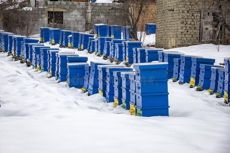 Scène de pays d'hiver avec des ruches photos libres de droits