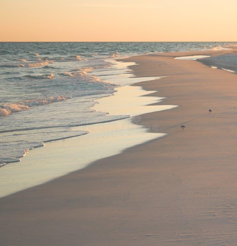 Scène de plage avec des bécasseaux image libre de droits