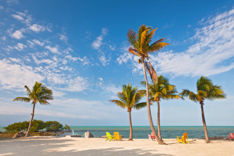 Scène de plage d'été avec des palmiers et des chaises longues photos libres de droits