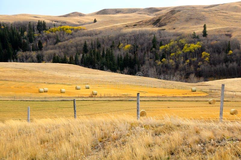 Scène de prairie photo stock