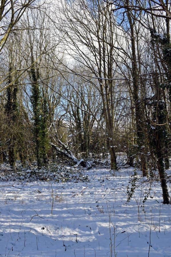 Scène de région boisée de Milou photographie stock