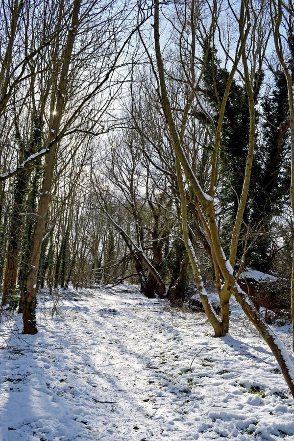 Scène de région boisée de Milou photos stock