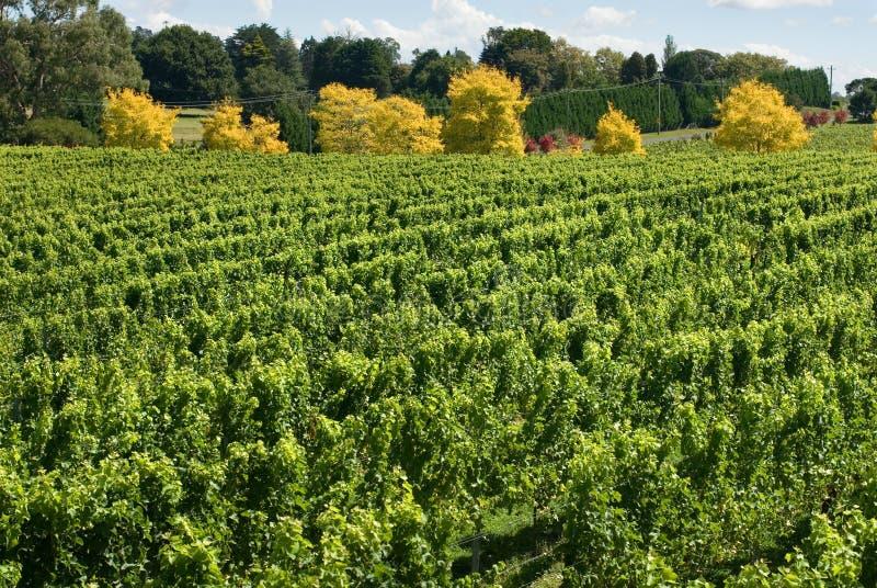 Scène de vigne images stock