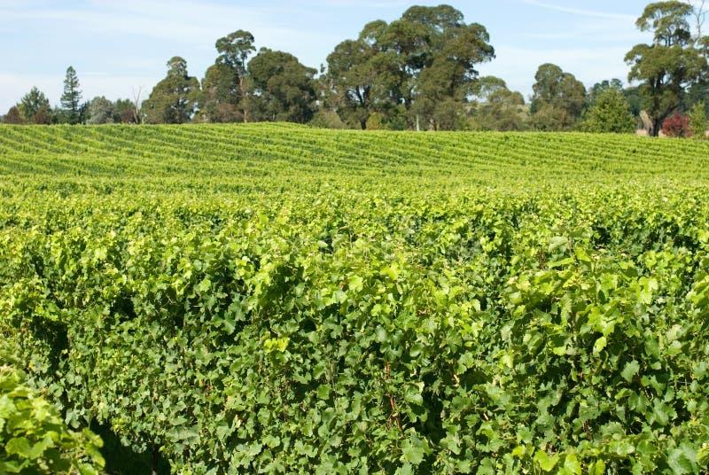 Scène de vigne photos stock