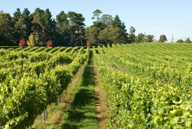 Scène de vigne image stock