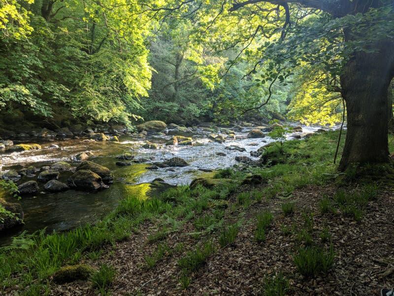 Scène du nord de région boisée de rivière du Pays de Galles photo libre de droits