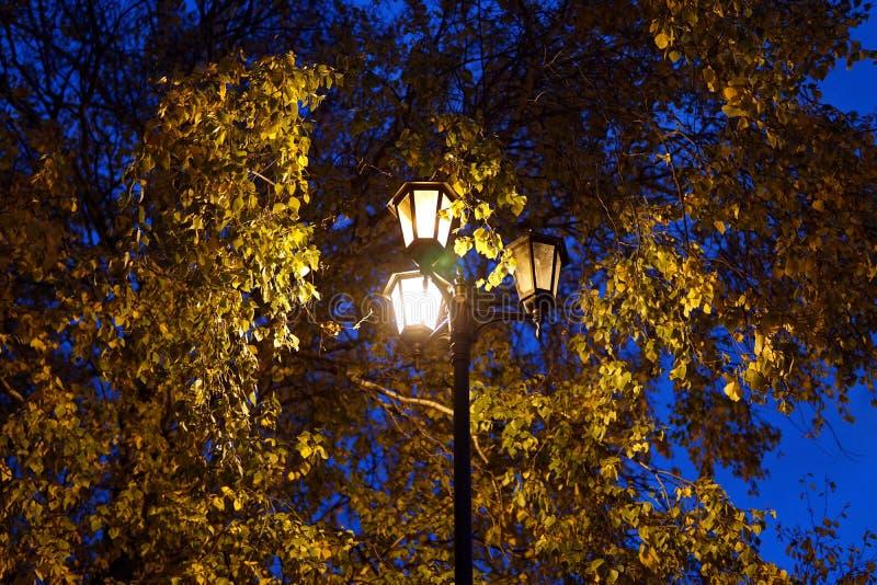 Scène du parc Les réverbères illuminent les couronnes d'automne des arbres photographie stock