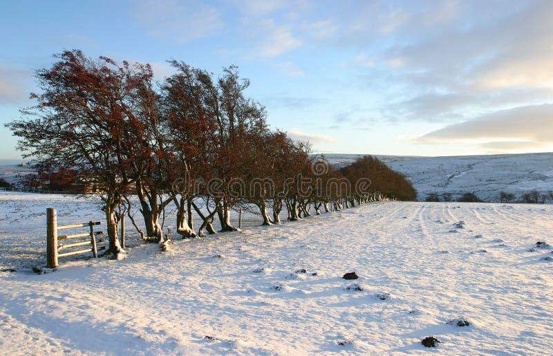 Scène hivernale photo stock