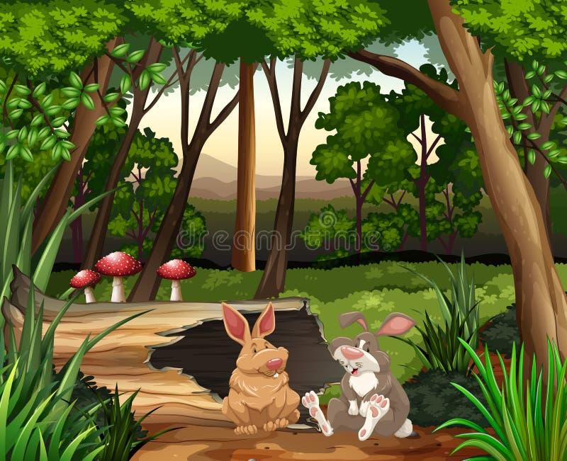 Scène met twee konijnen in bos royalty-vrije illustratie