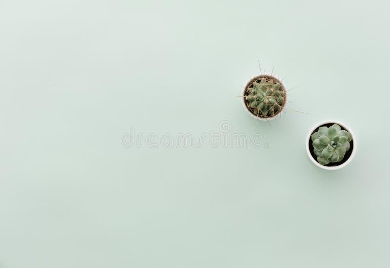 Scène minimaliste neutre de configuration d'appartement avec le cactus image libre de droits