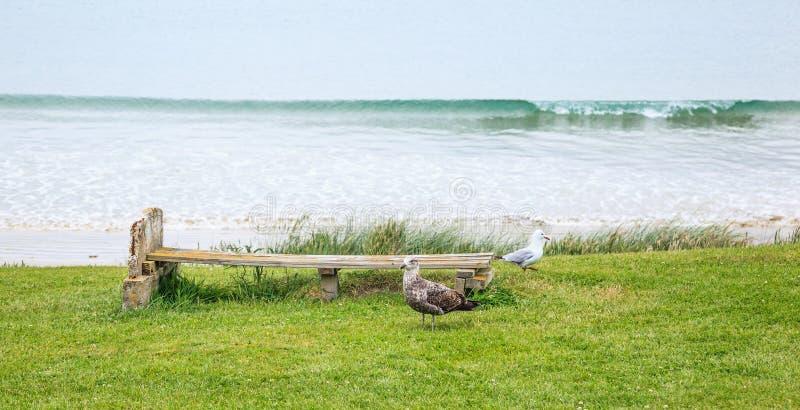 Scène paisible de banc en bois pour se trouver votre dos sur le jardin d'herbe faisant face à la plage sablonneuse avec de pigeon photographie stock libre de droits