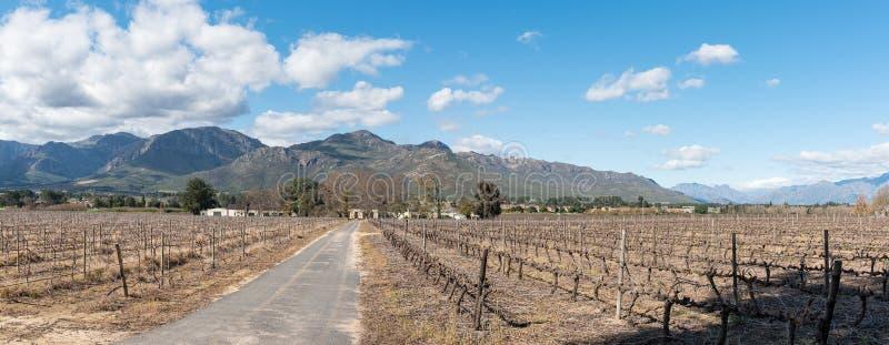 Scène panoramique de ferme, avec des vignobles et des bâtiments, chez Paarl photo libre de droits