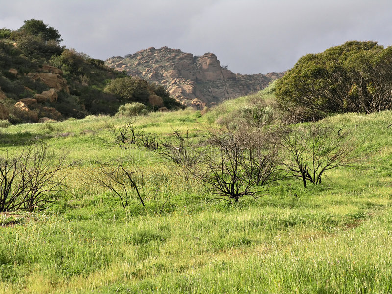 Scène pastorale d'herbe verte images stock