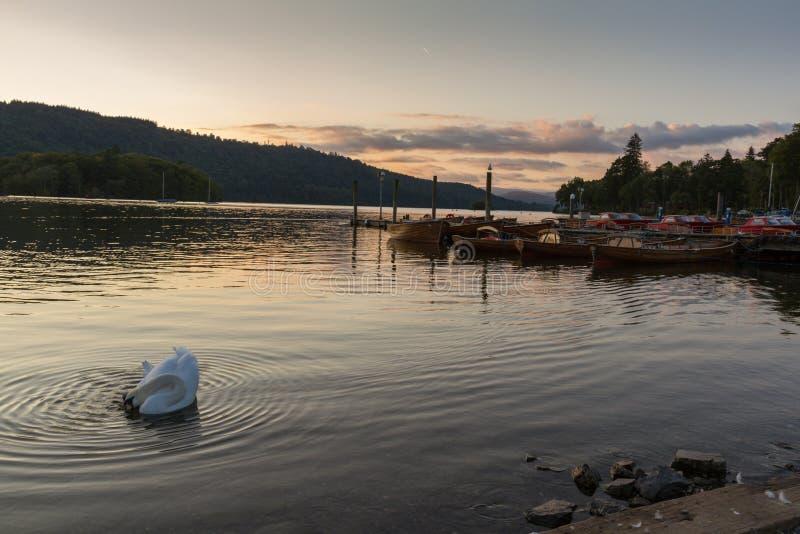 Scène romantique de crépuscule de beau cygne muet et de bateaux amarrés dans le lac Windermere photographie stock libre de droits