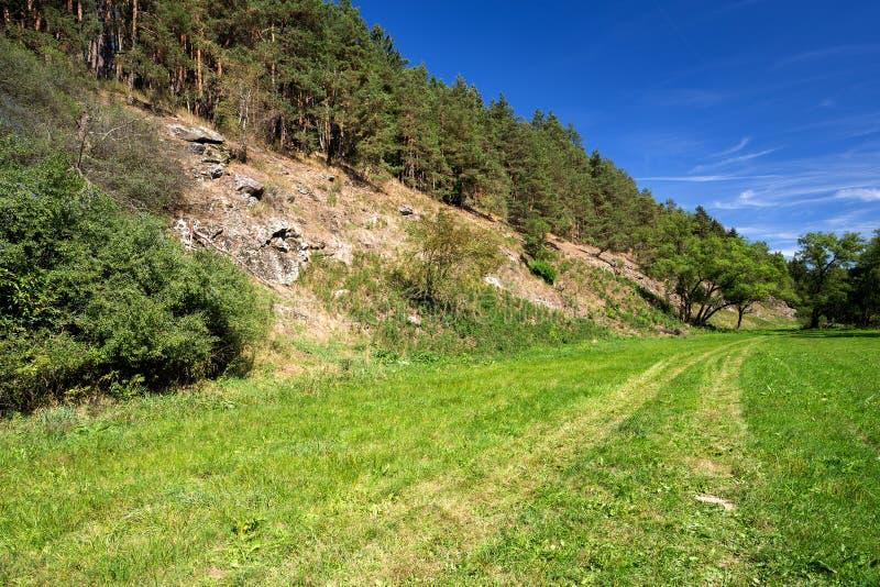Scène rurale avec le chemin et la forêt photo stock