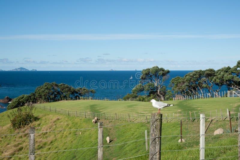 Scène rurale et côtière de la Nouvelle Zélande. photo libre de droits