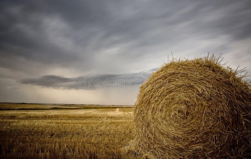 Scène Saskatchewan de prairie photographie stock