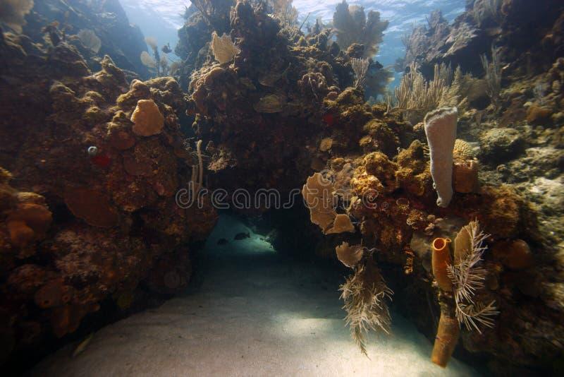 Scène sous-marine de récif coralien photos stock