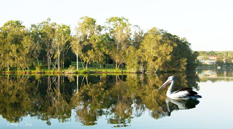 Scène tranquille avec les arbres verts et les réflexions de l'eau images stock