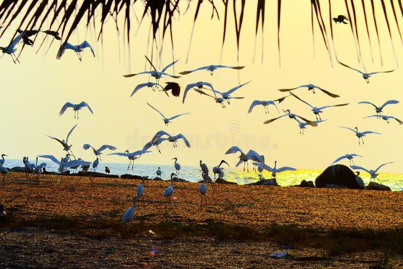 Scènes de coucher du soleil photos stock