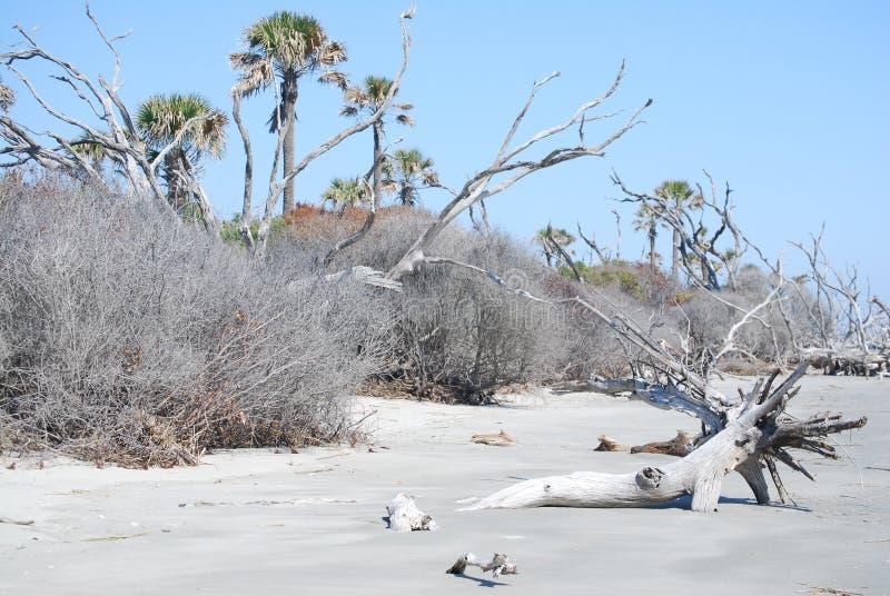 Sc Boneyard d'île de Taureau photos libres de droits