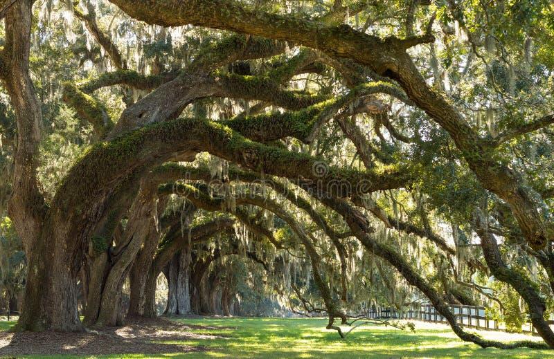 Sc di Charleston del viale delle querce fotografie stock