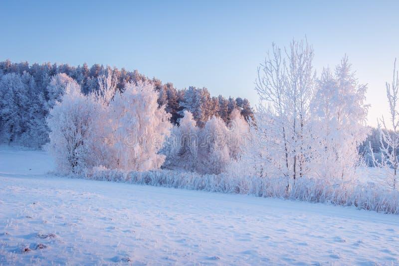 Sc?ne de l'hiver. Frost et neige le matin. Paysage hivernal enneigé au soleil matinal. Belle nature gelée photo libre de droits