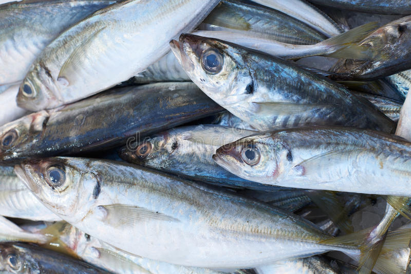 Scad fish for sale on market