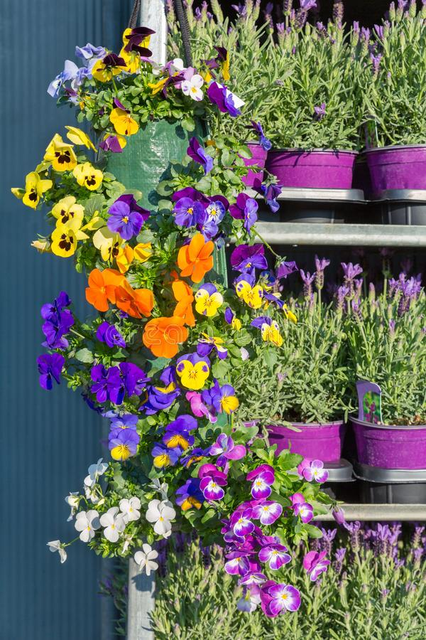 Scaffale del metallo riempito di fiori di fioritura della molla fotografia stock libera da diritti