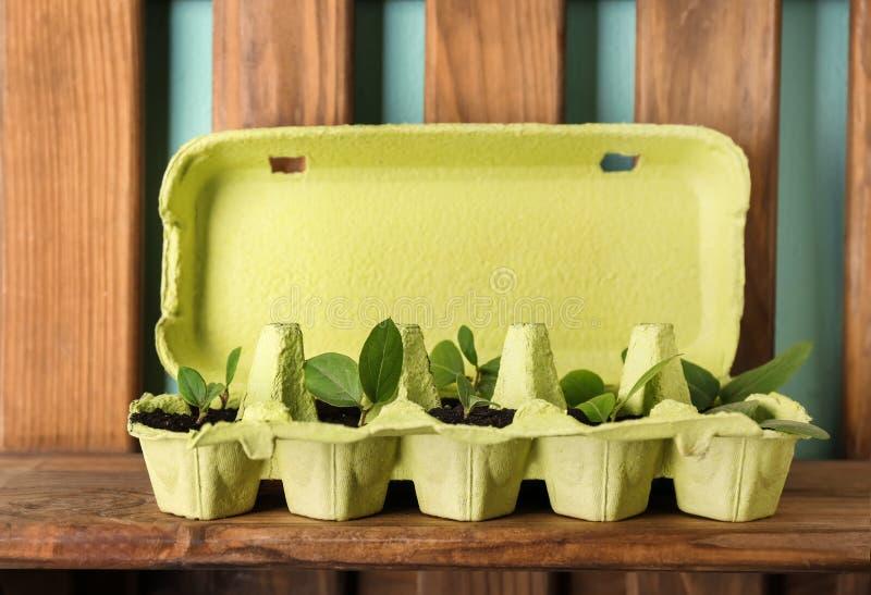 Scaffale di legno con la scatola delle uova del cartone utilizzata come contenitore fotografia stock libera da diritti