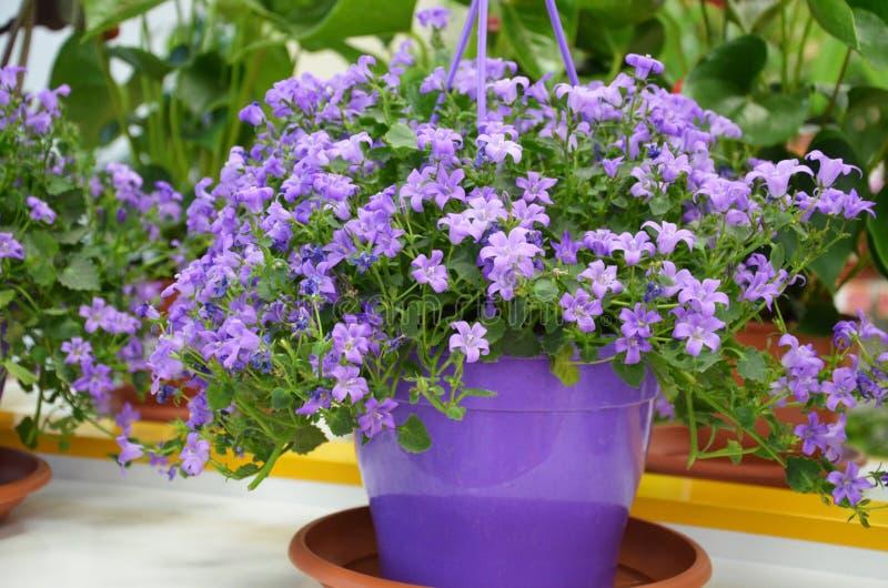 Scaffali con i vasi dei fiori immagine stock