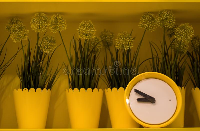 Scaffali gialli con i vasi da fiori gialli e una sveglia gialla immagini stock