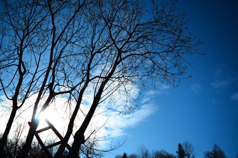Scala al sole che si appoggia albero fotografia stock