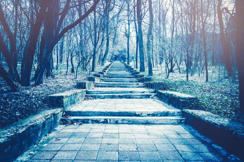 Scala di pietra che aumentano in un effetto spettrale della foresta di mistero fotografia stock