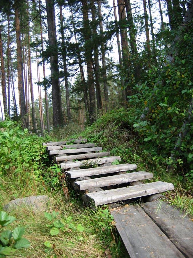 Download Scala nella foresta fotografia stock. Immagine di cespugli - 204270