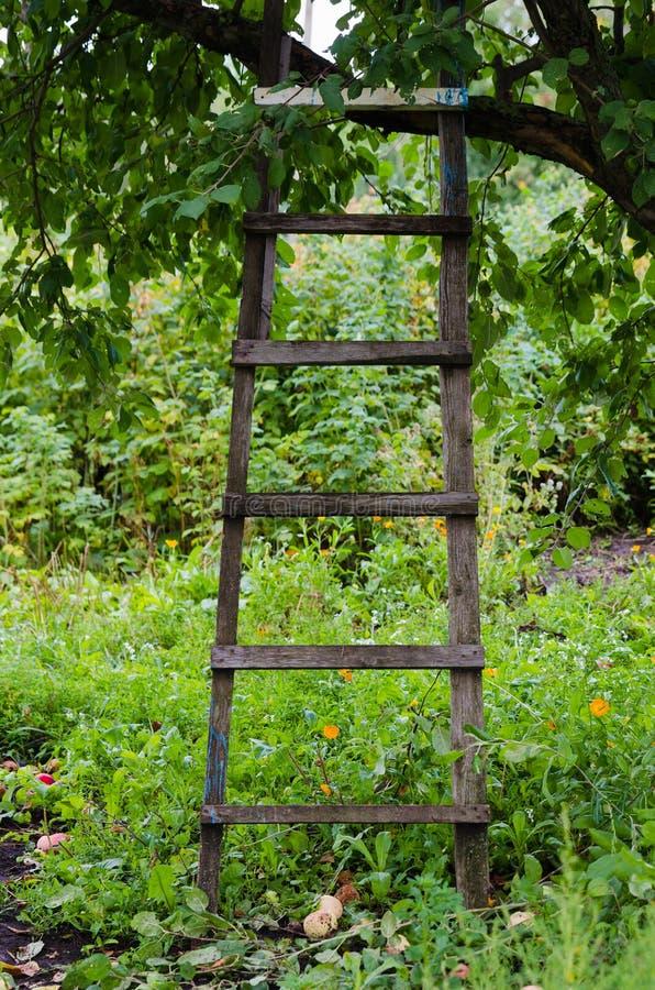 Scala reale all 39 albero da frutto in giardino verde fotografia stock immagine di foglio - Scala da giardino ...