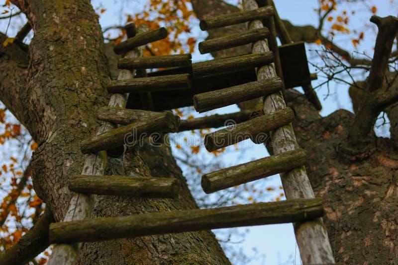Scala rotta sull'albero in foresta fotografia stock libera da diritti