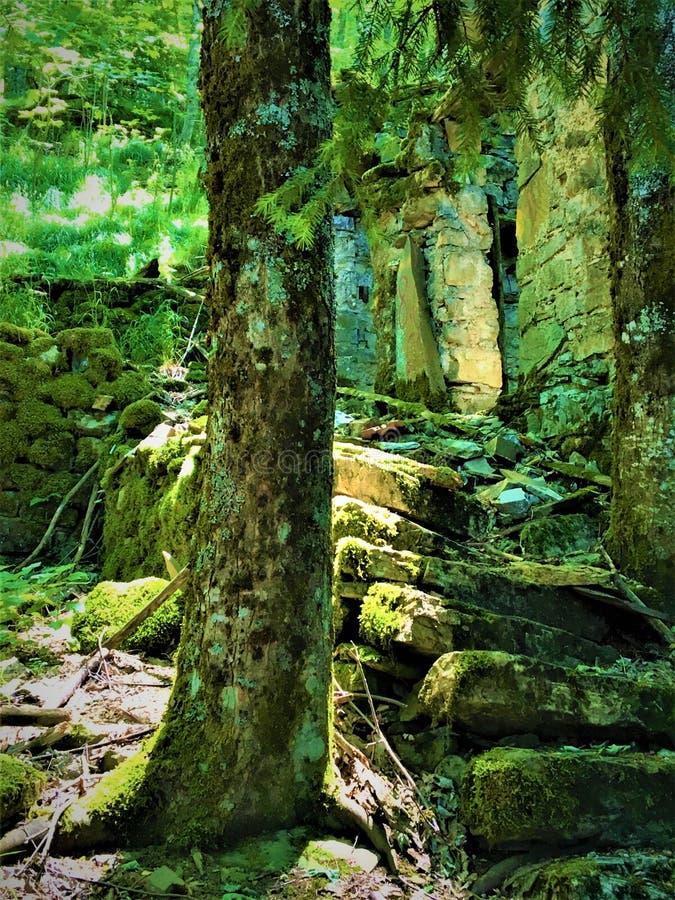 Scala, tronco, luci e rovine incantati fotografie stock