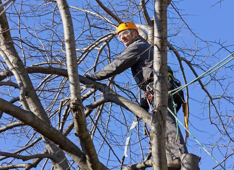 Scalatore dell'albero fra i rami fotografia stock
