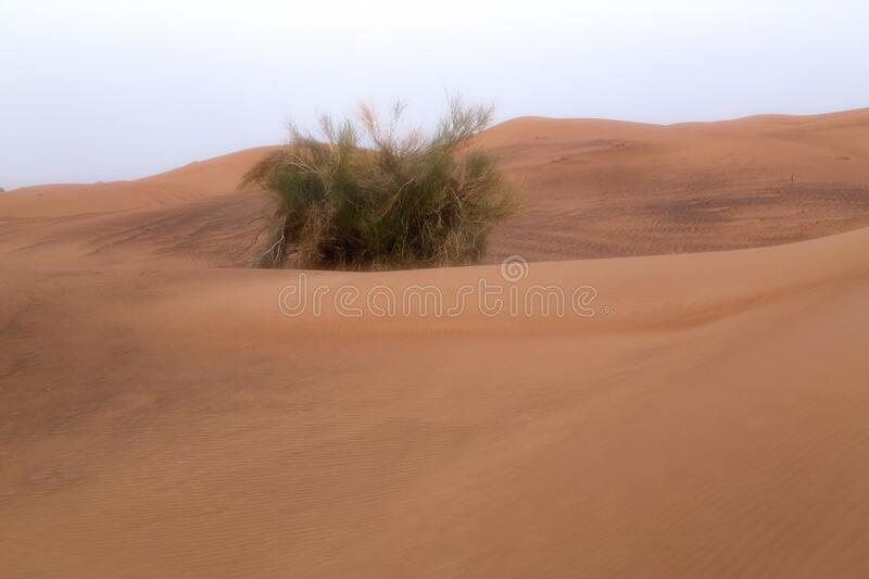Scale backgrounds of desert and dunes, Dubai, Emirates stock images