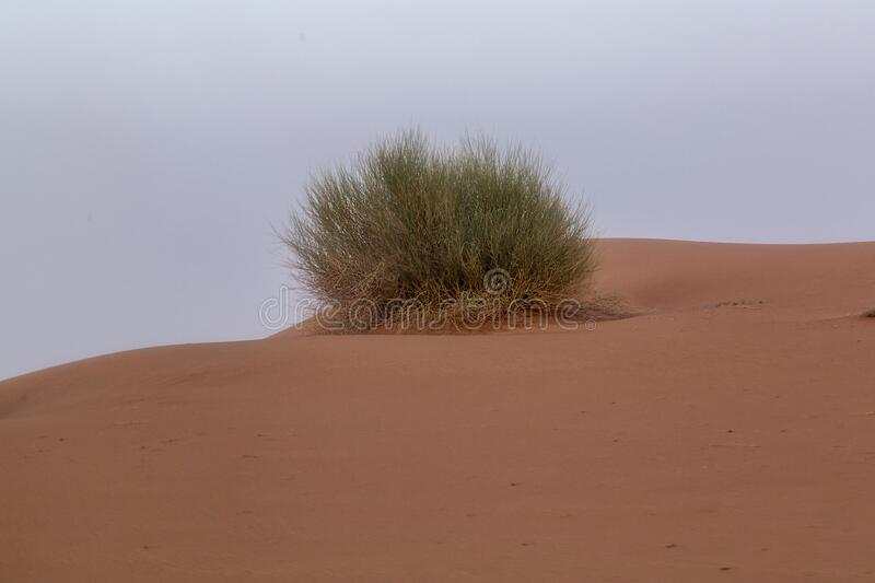 Scale backgrounds of desert and dunes, Dubai, Emirates royalty free stock photography