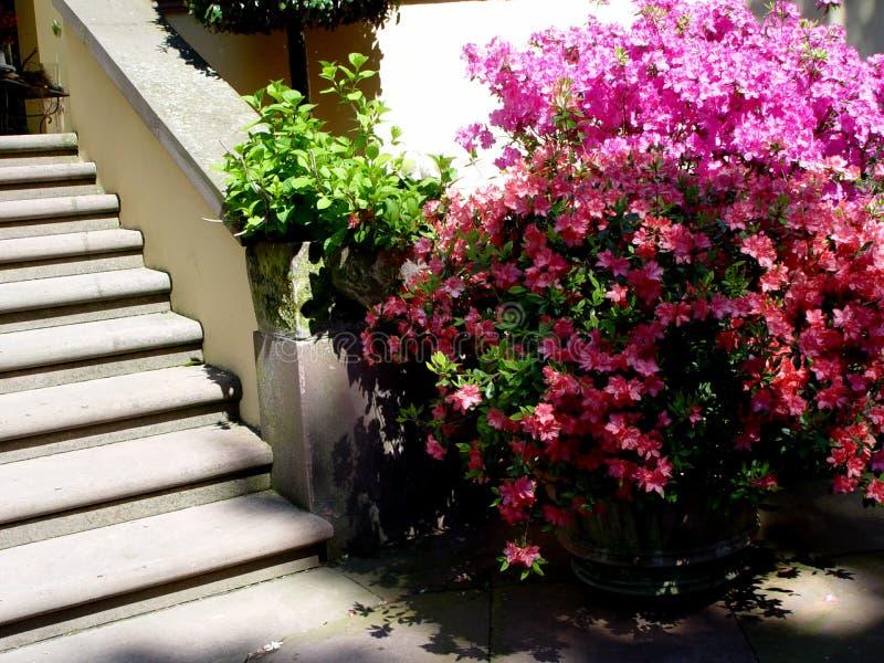 scale del giardino fotografia stock