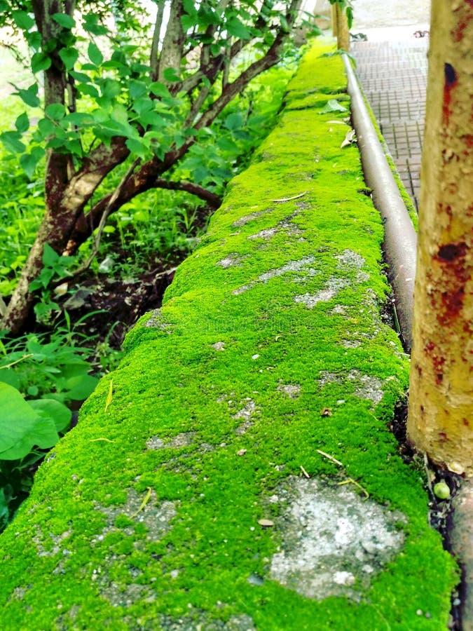 Scale della pianta al tempio fotografie stock libere da diritti