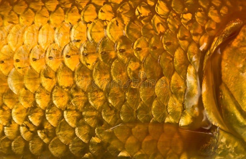 Scale di pesci fotografia stock