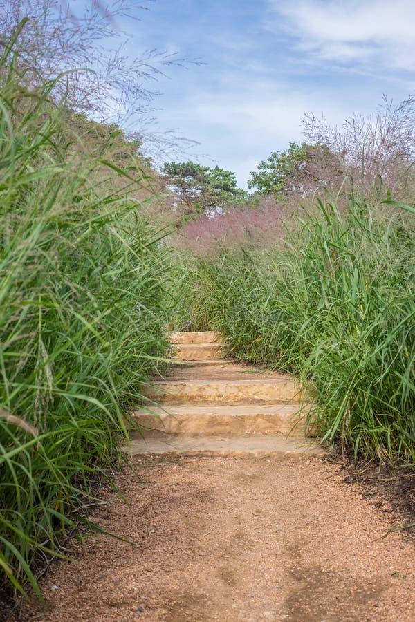Scale di via con erba alta fotografia stock libera da diritti