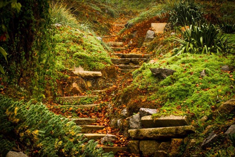 Scale romantiche di autunno immagine stock