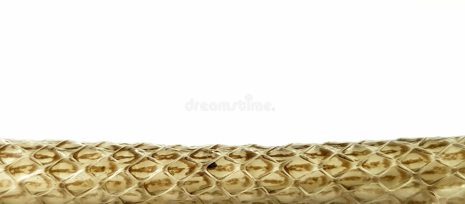 Scaled skin of snake on white background,Natural skin texture. Copy space for background texture royalty free stock images