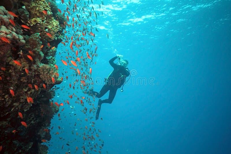scalefin рифа фотографа рыб стоковое изображение